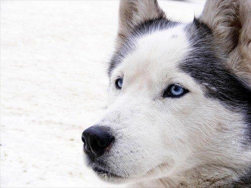 Avatarko ru → admin → животные → лайка