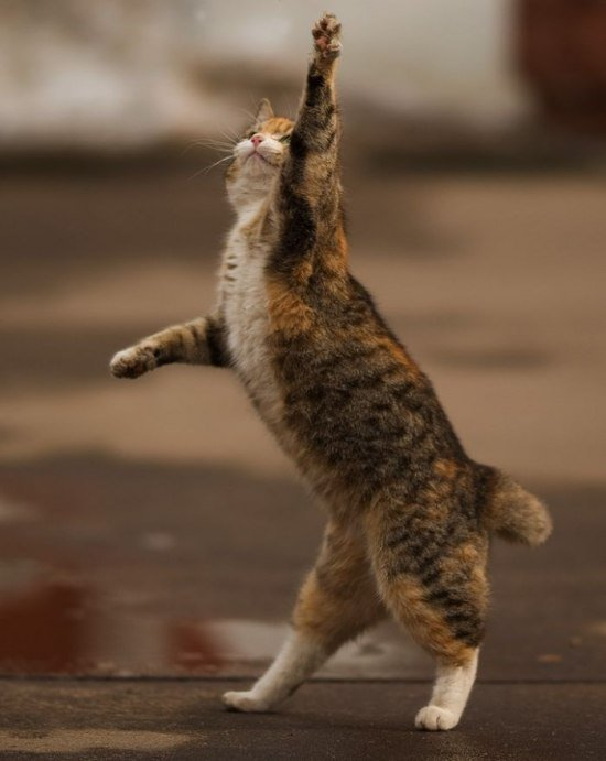Avatarko ru admin животные кот