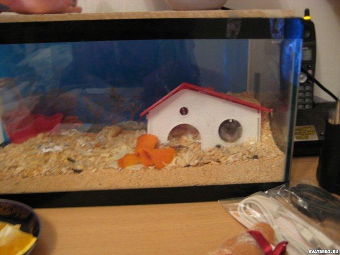 Обустройство аквариума для хомяка своими руками 39